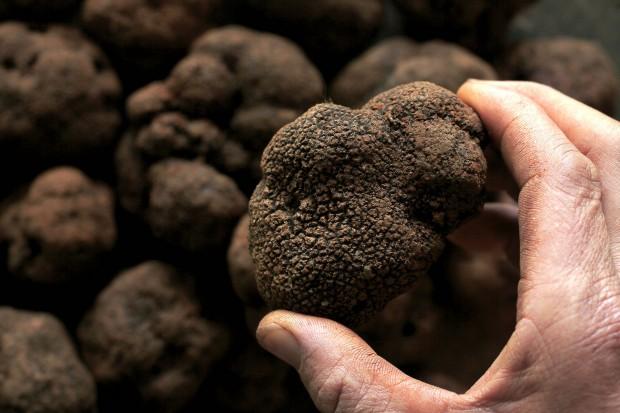 Trufas de Yunnan podem custar mais de R$ 1.000 o quilo no varejo